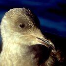 Seabird Portrait  by lanebrain photography