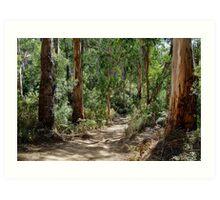 Newcomb Spur Track,Otway Ranges. Art Print