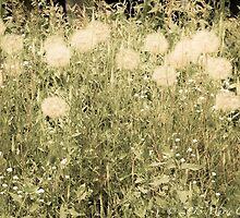 Dandelions by Marie  Cardona