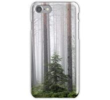 20.6.2015: Spruce Tree in the Pine Forest iPhone Case/Skin
