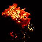 'Passionate Petals' by StarKatz