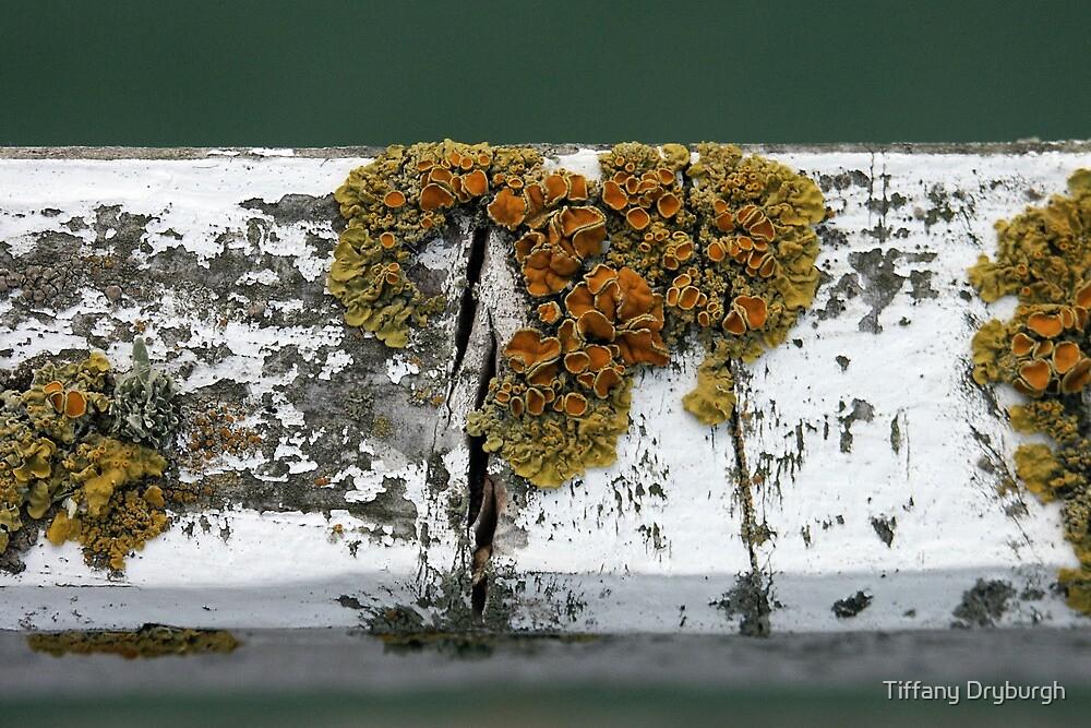 Lichen by Tiffany Dryburgh