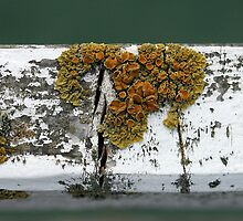 Lichen by Tiffany Dryburgh