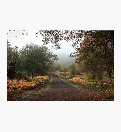 Misty Road of Autumn Photographic Print