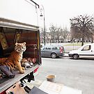 FEB20 Tiger on the Loose by BlaizerB