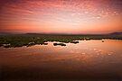 Desperate dawn by Vikram Franklin