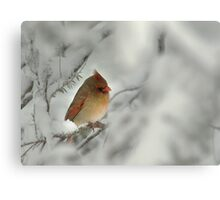 Female Cardinal in Winter Snow Canvas Print