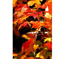 fiery leaves of fall...lords of karma Photographic Print