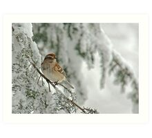 Tree Sparrow in Snow Storm Art Print