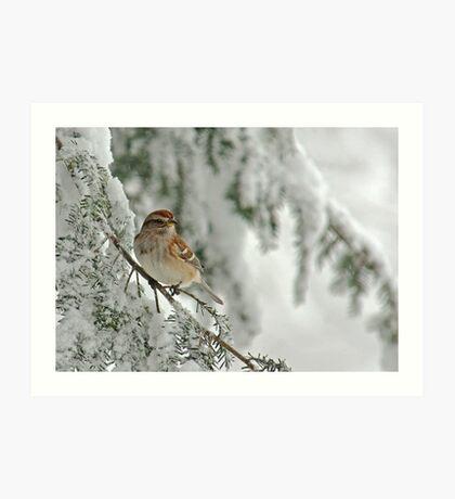 Tree Sparrow in Snow Storm Art Print