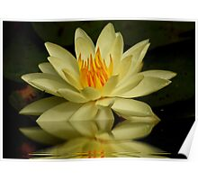 Yellow Waterlily Poster