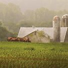 Country - Amish Farming by Mike  Savad