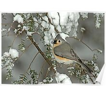 Tufted Titmouse in Winter Snow Storm Poster