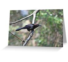 Common Grackle - Quiscalus quiscula Greeting Card