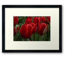 Vibrant Red Spring Tulips Framed Print