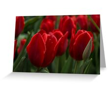 Vibrant Red Spring Tulips Greeting Card