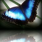 Blue wonder by Yool