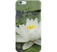 Lily of the Lake iPhone Case/Skin