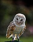 Barney, A Small but Frisky Owl  by Chris Lord
