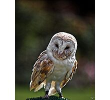 Barney, A Small but Frisky Owl  Photographic Print
