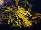 """Oceans Rhythm"" by debsphotos"