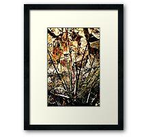 Tigers....? Framed Print