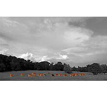 Select Herd Photographic Print
