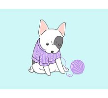 French Bulldog in a Knitted Jumper Photographic Print