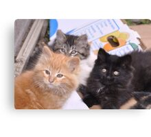 A Tale of Three Kittens Canvas Print