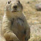 Prairie Dog Standoff by shutterbug2010
