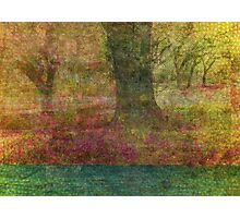 Autumn Landscape in yellow, red, and orange Photographic Print