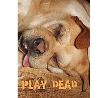 Play Dead... Photographic Print