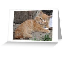 Bruce the Kitten Greeting Card