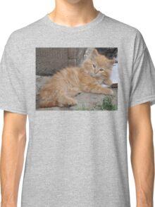 Bruce the Kitten Classic T-Shirt
