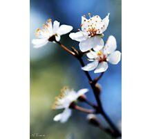 wild plums Photographic Print