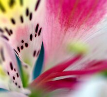 In Need Of Colour by HelenBeresford