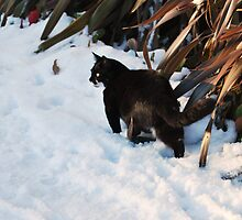 Cat in Snow by Carolyn Stringer