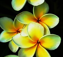Vibrant by Carol Field