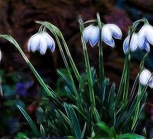 Snowdrops by Susie Peek
