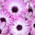 Purple and White by Dave Hare