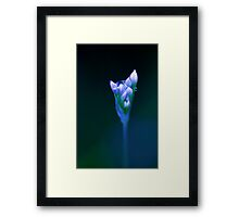 Out of the Blue - chive flower  Framed Print