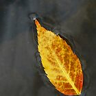 Autumn Leaf by Richard Lawry