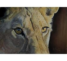 Lion(ess) Eyes Photographic Print