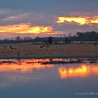 On Golden Pond  by Michael  Callahan