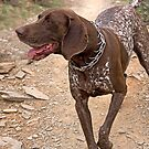 Canine Hiker by Sue  Cullumber