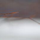 Winter Beech by ckroeger