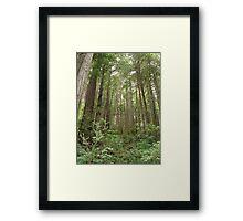 Land Of The Giants Framed Print