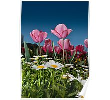 Floriade Tulips Poster