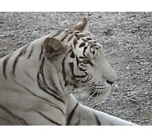 Who Says You Can't Sneak Up On A Tiger ? Photographic Print
