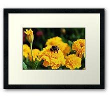 Springtime Delight Framed Print